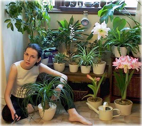 Красивые и полезные комнатные цветы